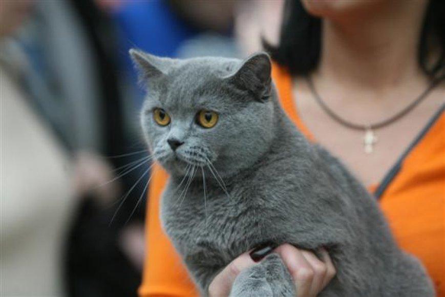 Kaune vyks kačių paroda