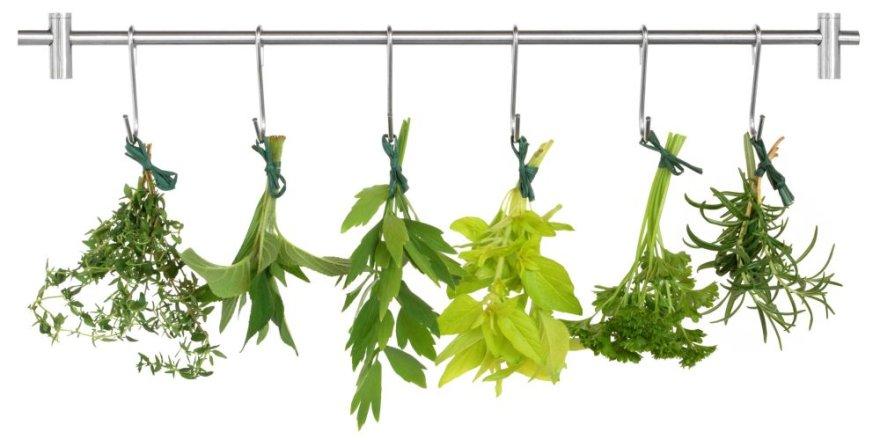Prieskoniniai augalai