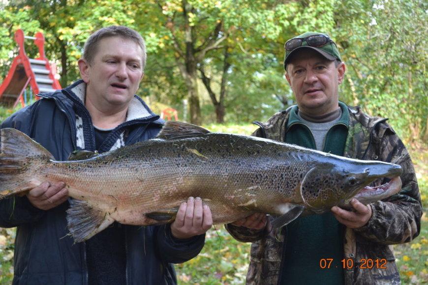 Vilniuje sužvejota 15 kg lašiša