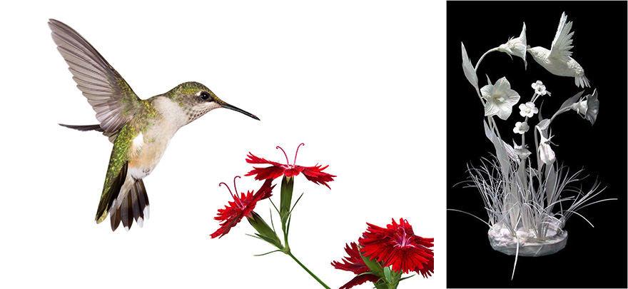 Projekto partnerio nuotr./Paukštis / Allen Eckman