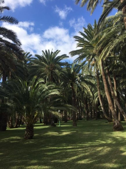 Palmės Gran Kanarijoje