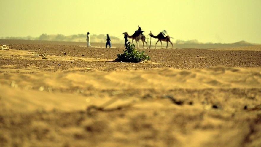 Pažintis su dykuma