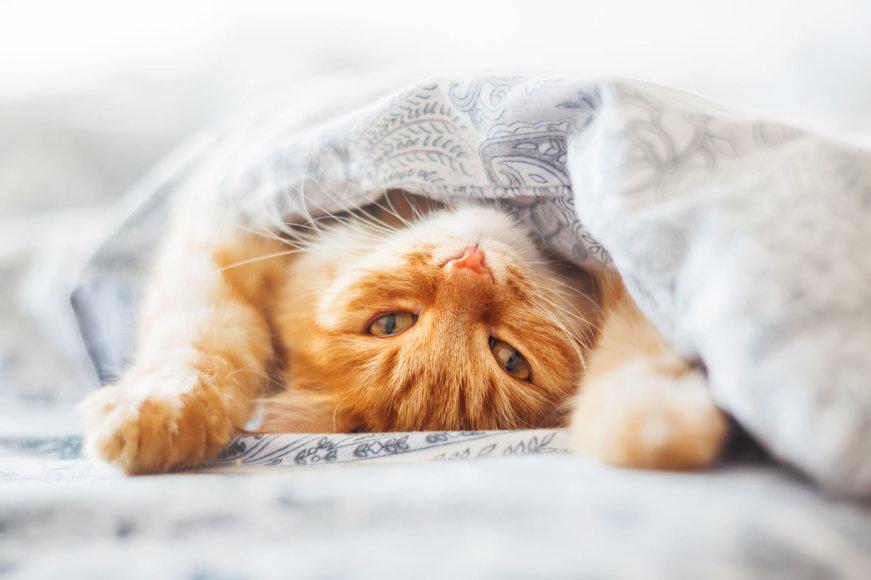 Fotolia nuotr./Katinas