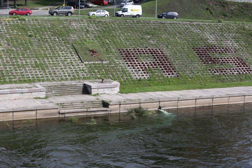 Į Nerį tekantis ryškiai žalias vanduo