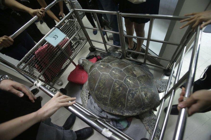 Tailande veterinarai iš vėžlio skrandžio pašalino 915 monetų
