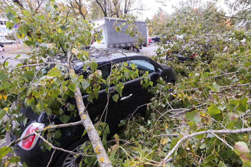 Išlaužtas medis Konarskio gatvėje