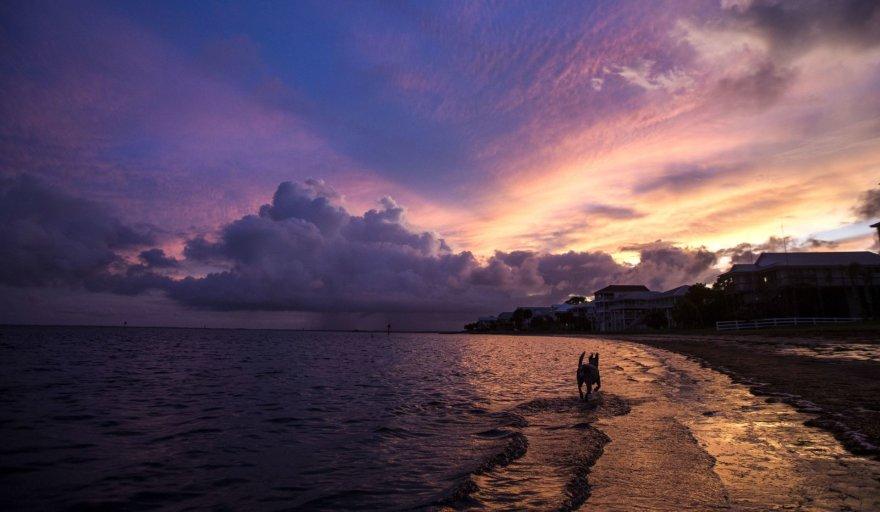 """Prie Floridos pakrantės artėja atogrąžų audra """"Hermine"""""""