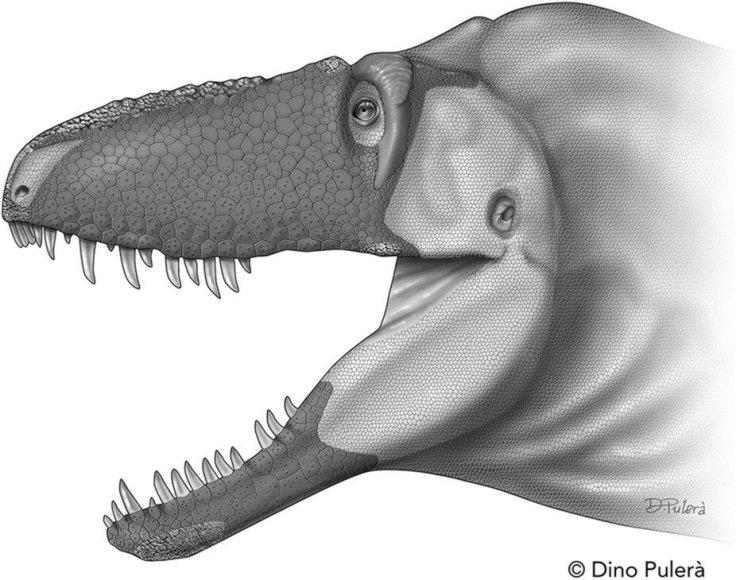 Daspletosaurus horneri snukio išvaizdos rekonstrukcija