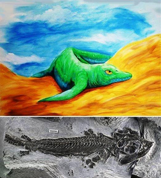 Taip, meniniko akimis, atrodė (viršuje) Kinijoje rasta fosilija (apčioje)