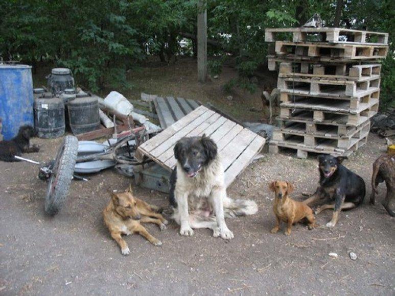 Beglobiai šunys