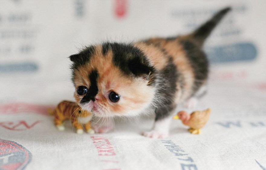 Memebon – mieliausia katytė pasaulyje.