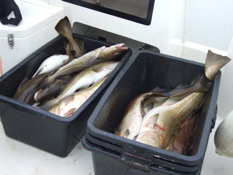 Britų mokslininkai nustatė, kad, norint išsaugoti gerą atmintį, reikia valgyti riebią jūrų žuvį.