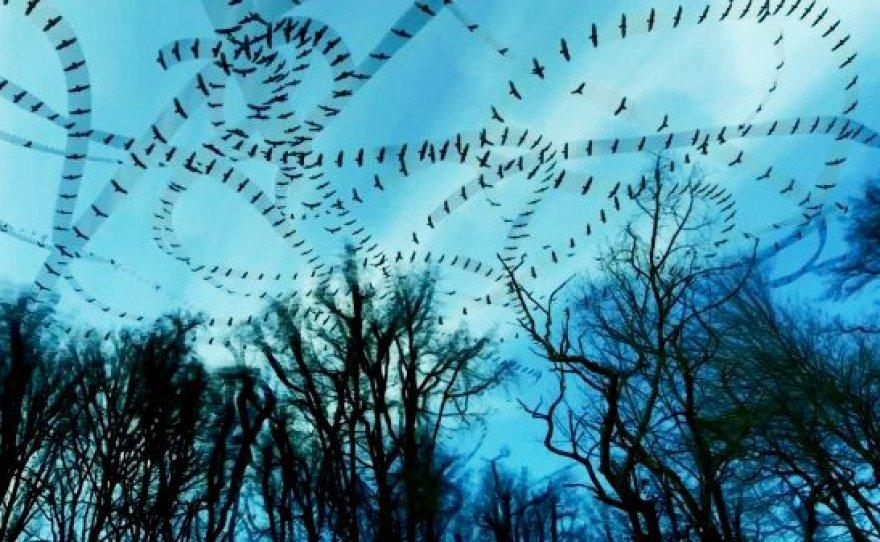 Paukščių judėjimas