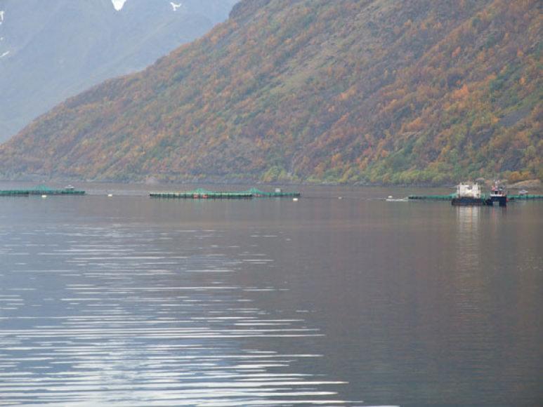 Lašišų fermos jūroje
