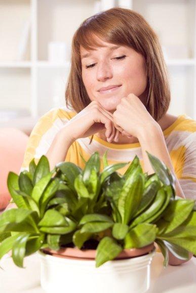 Kai kurios augalų rūšys į aplinką išgarina itin daug vandens.