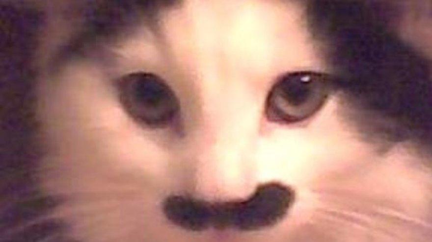 Į Hitlerį panašus katinas
