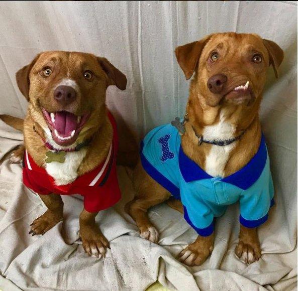 Šunys Pablo ir Picasso (dešinėje)