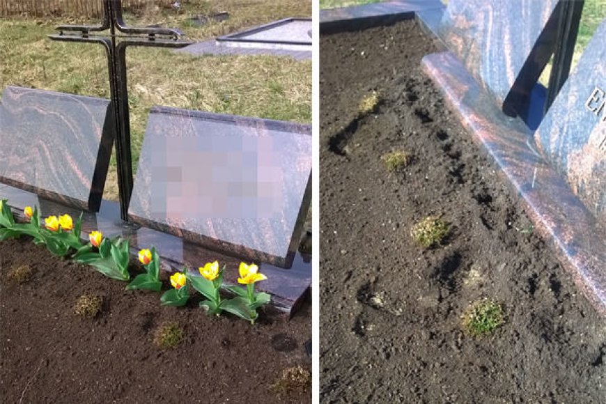 Vieną dieną Violetos sūnaus kapą dar puošė pražydusios tulpės, kitą rytą jis atrodė štai taip