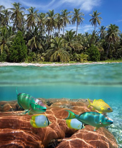 Kuboje dera visas gamtos grožis
