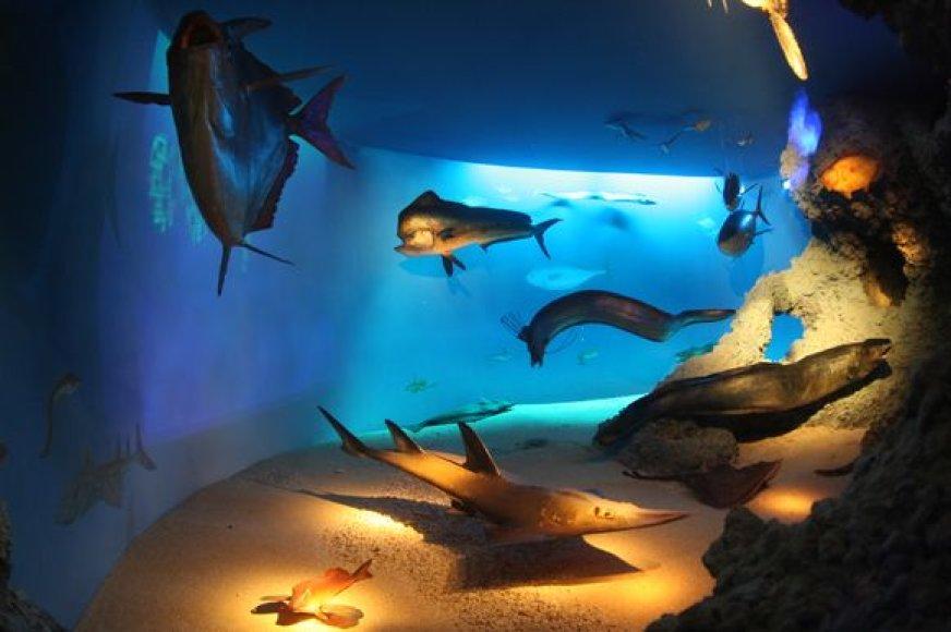 Jūrų muziejus