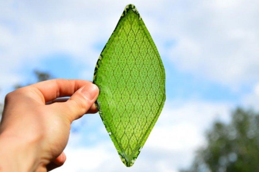 Dirbtinis lapas, galintis gaminti deguonį