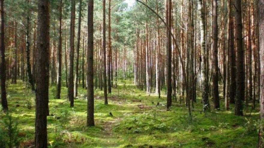 Bijotų miškas Metelių regioniniame parke