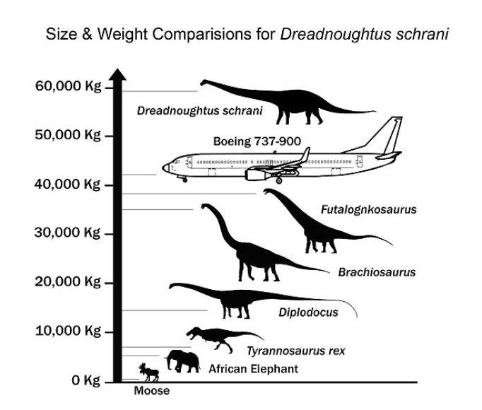 Dinozauro dydžio ir svorio palyginimas