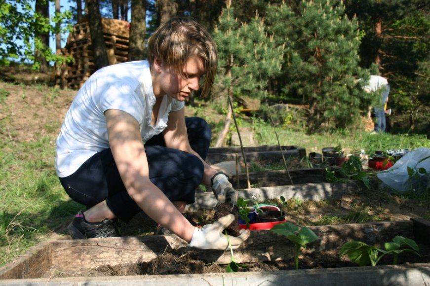 Klaipėdos viešosiose erdvėse norima įkurti daržus.