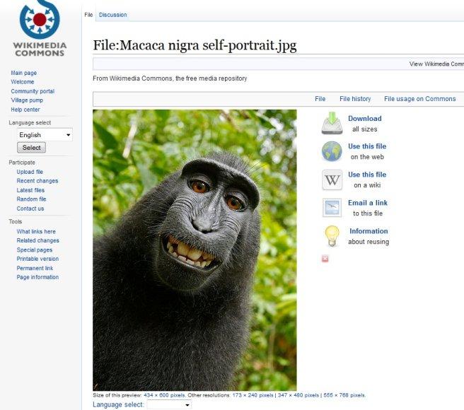 """Beždžionės asmenukė """"Vikimedijos fonde"""""""