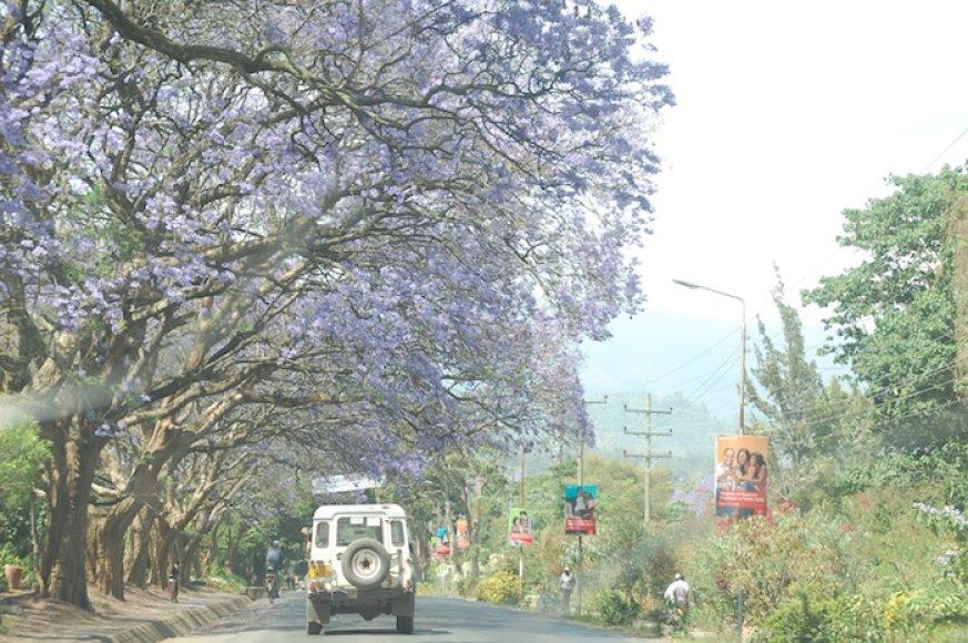 Tanzanijos gamta