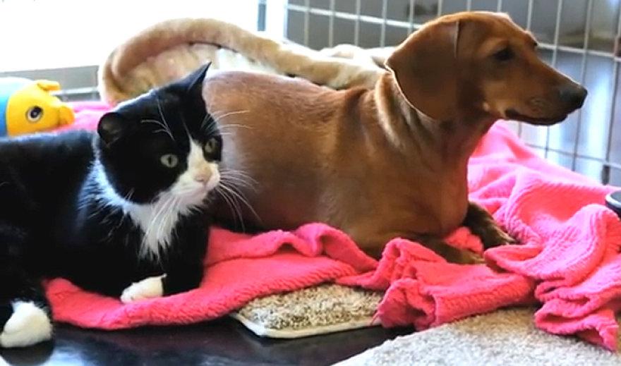 Taksas ir paralyžiuota katytė