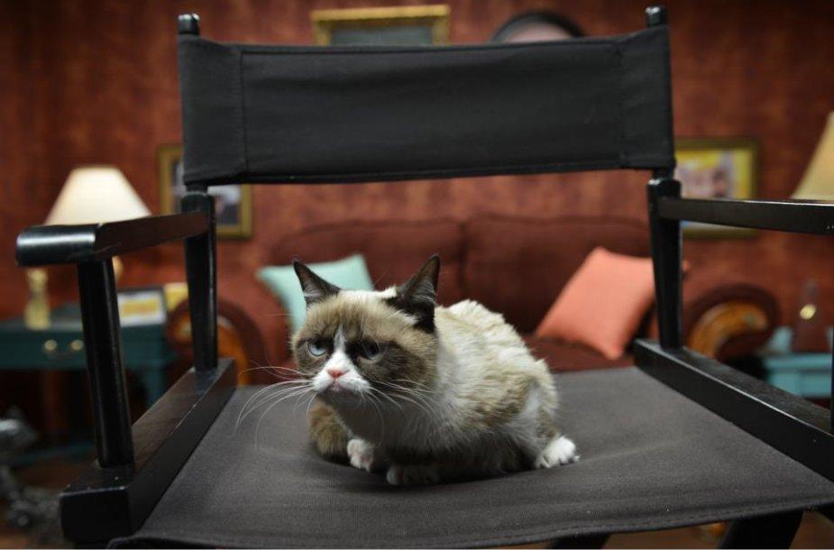 Piktasis katinas