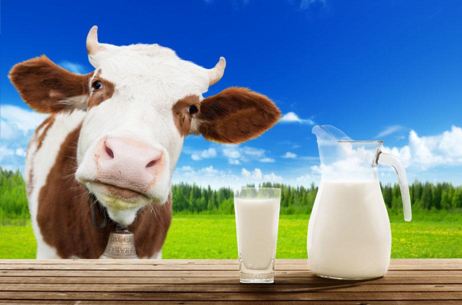 Karvės pienas
