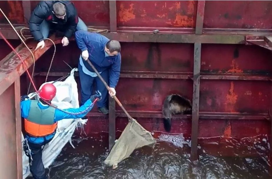 Bebro gelbėjimo operacija Širvintose