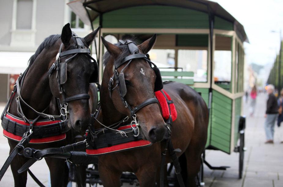 Arkliai Laisvės alėjoje
