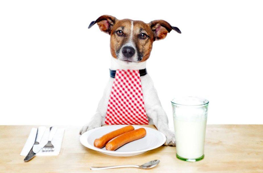 Alkanas šuo
