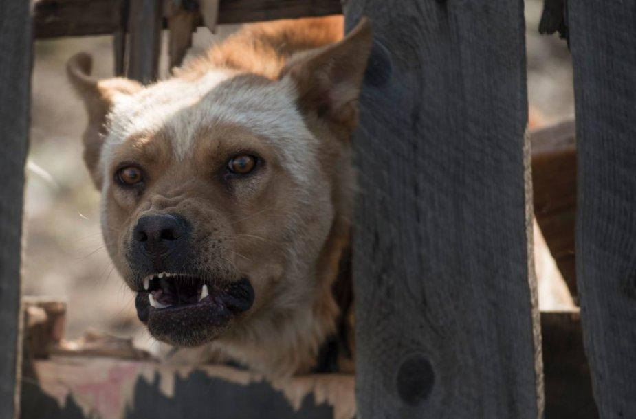 Lojantis šuo