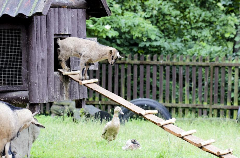 Lietuvos zoologijos sode – šiemet gimę jaunikliai