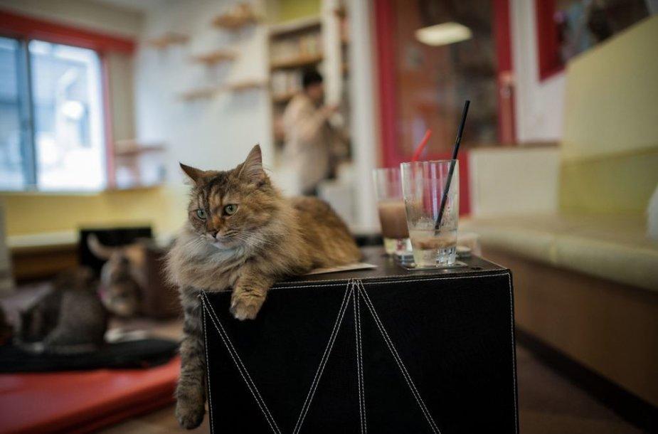 """Katė """"Kyariko"""" kavinėje"""