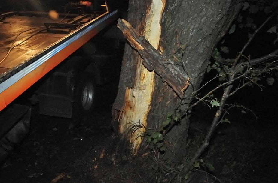 Po smūgio į šį medį BMW lūžo per puse
