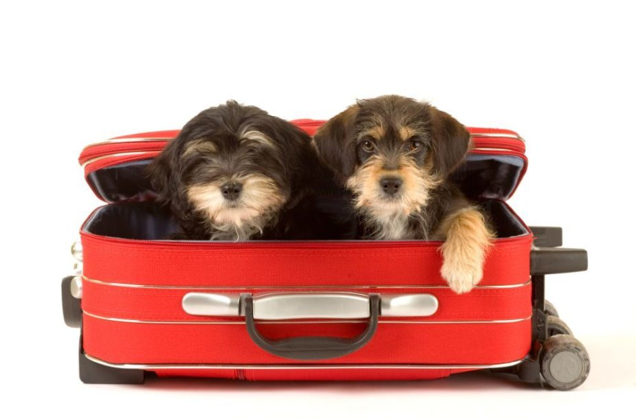 Šuniukai lagamine