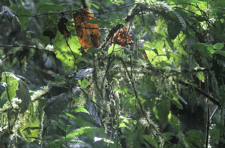 Atogrąžų miškai