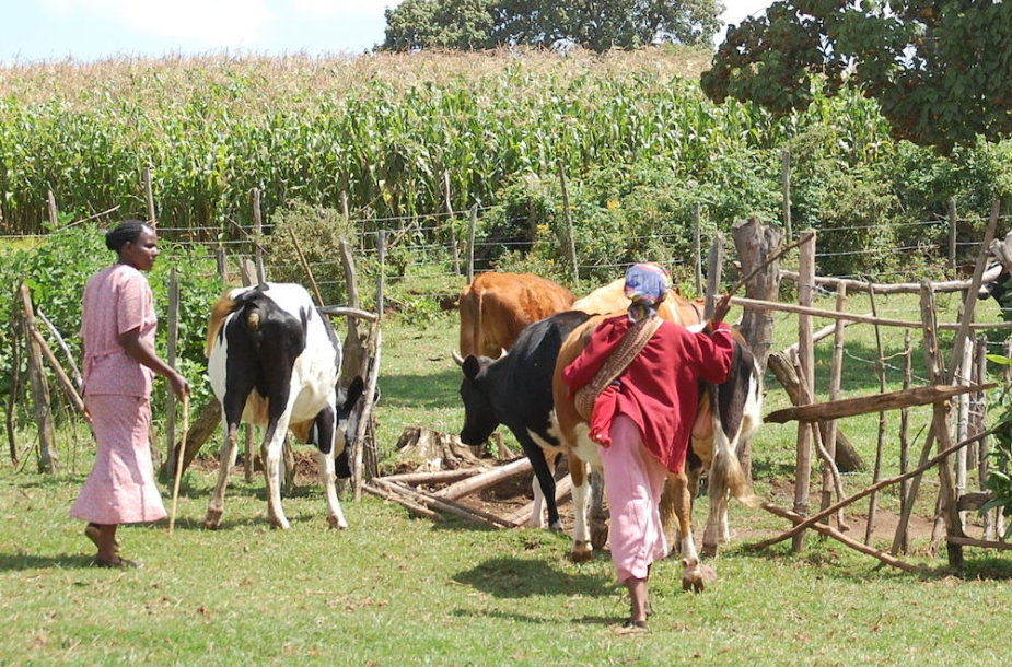 Ūkis Kenijoje