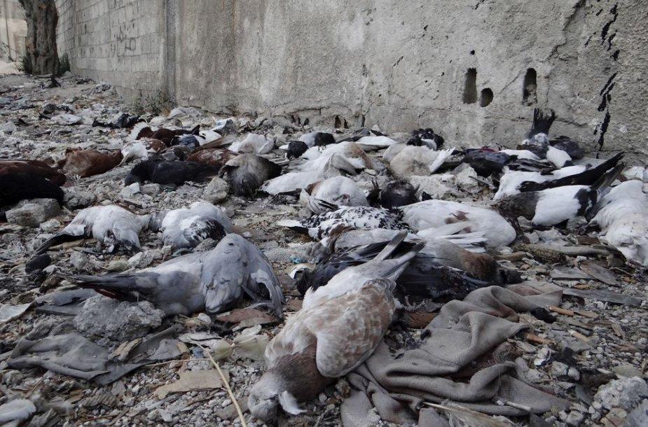 Sirijoje per įtariamą cheminę ataką nugaišę karveliai.