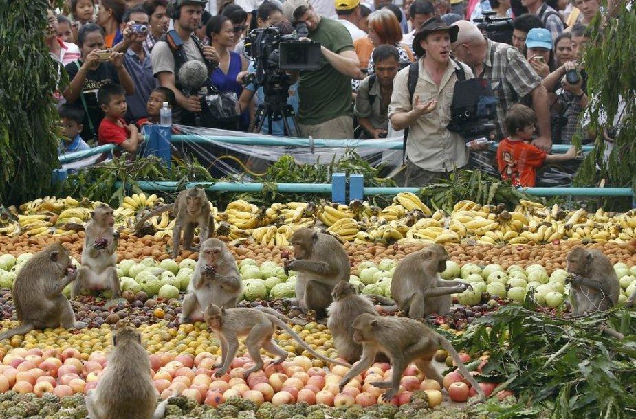 Beždžionių šventė Tailande