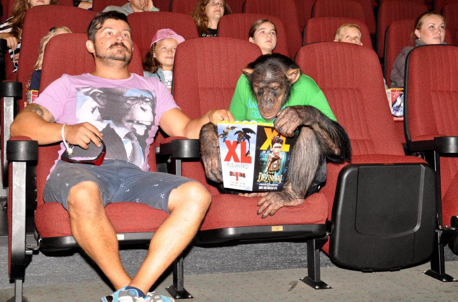 Šimpanzė Džonis dirbo kino teatre