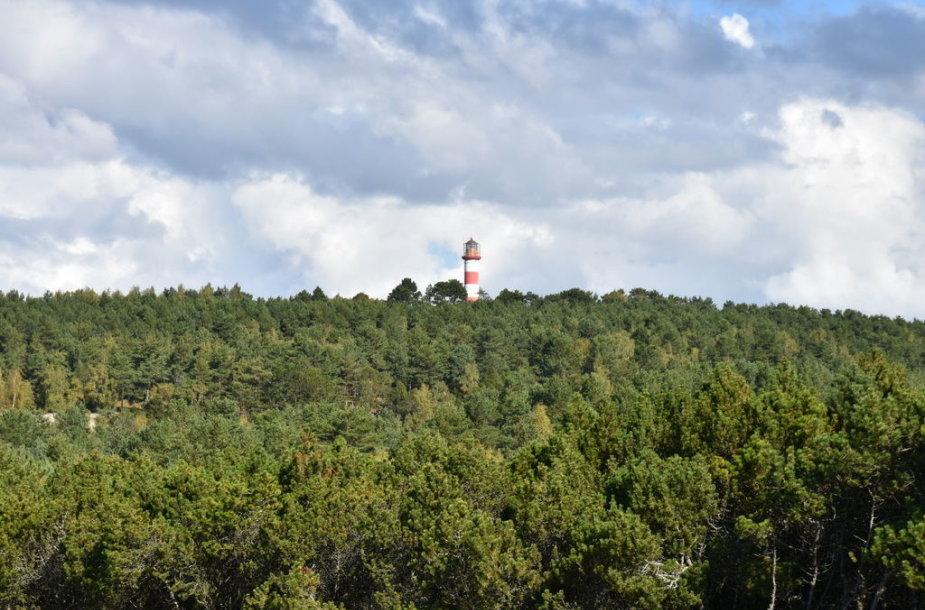 Urbo kalnas – viena pirmųjų apželdintų kopų Nidoje