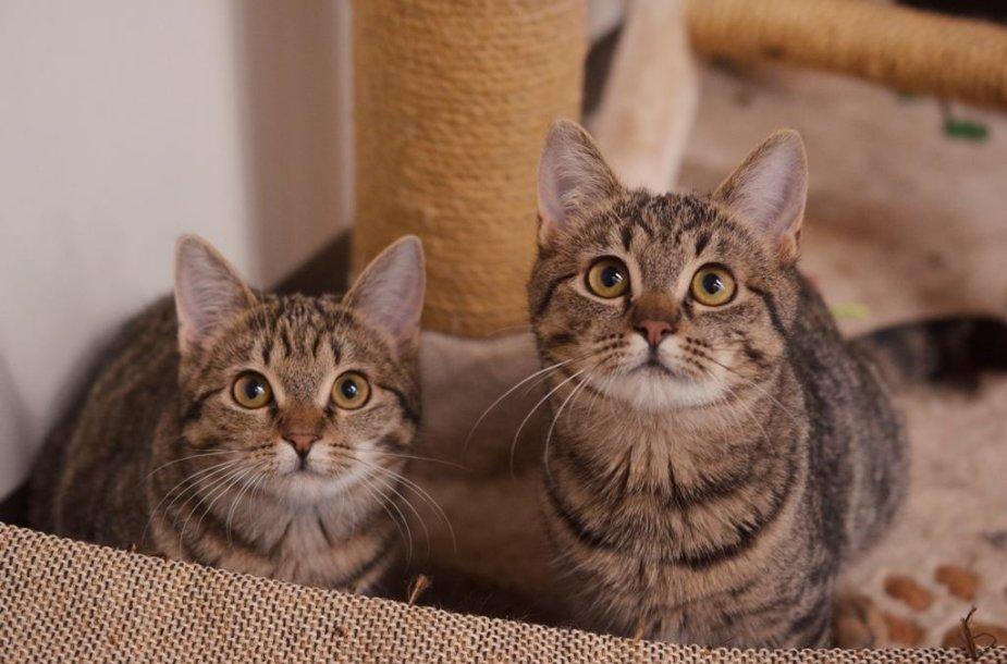 Į gyvūnų prekių parduotuvę – ne tik apsipirkti, bet ir rasti naują šeimos narį