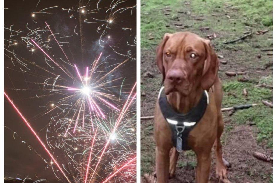 Nuo pirotechnikos sprogimų pabėgęs ir ieškomas šuo