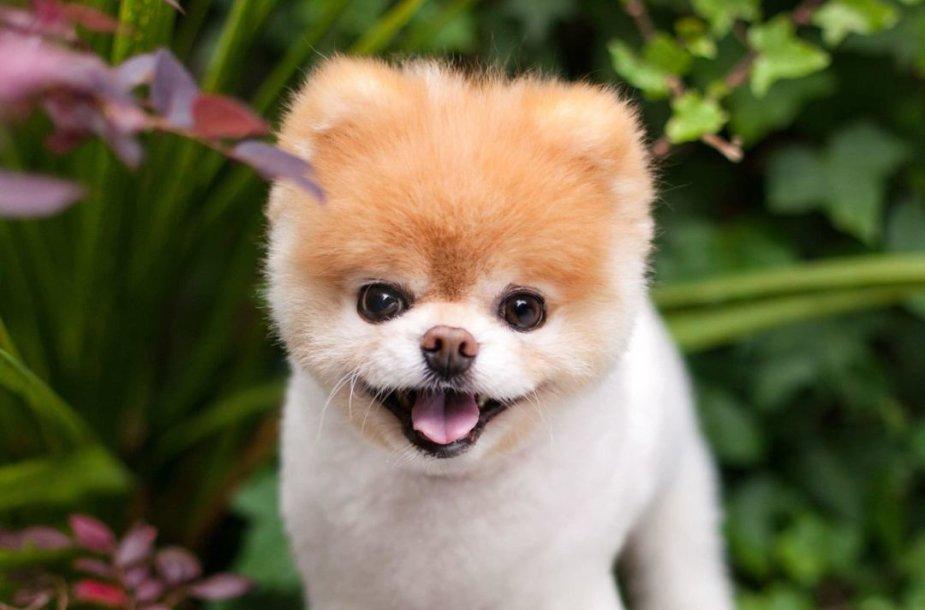 Mieliausias pasaulio šuo Boo